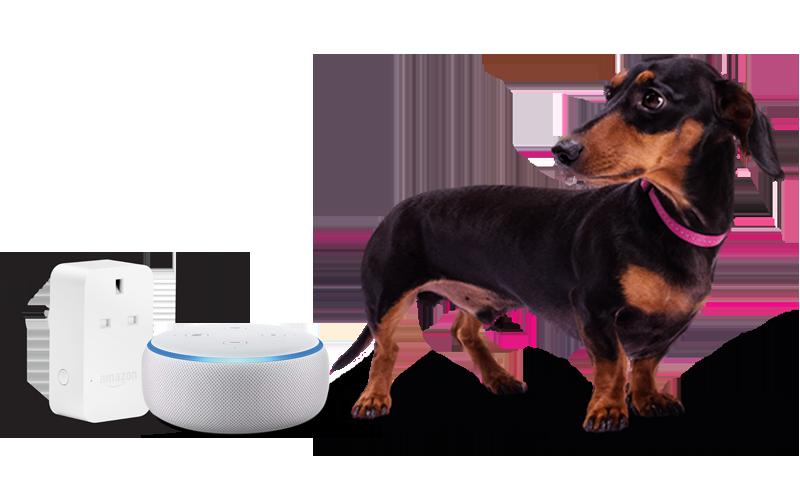 Stanley and Amazon Echo dot and plug