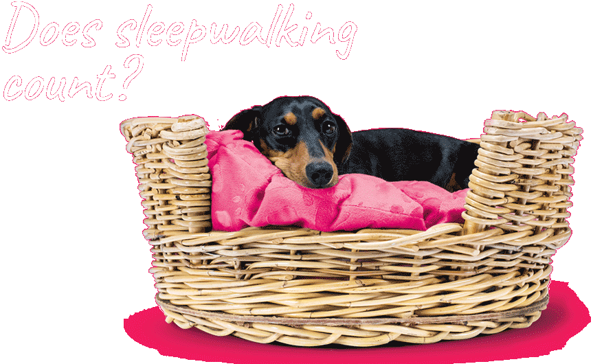 sleepwalking stanley image