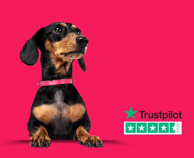 Stanley the dog with the Trustpilot logo
