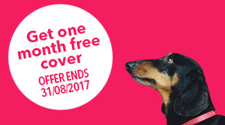 Stanley with one month free offer