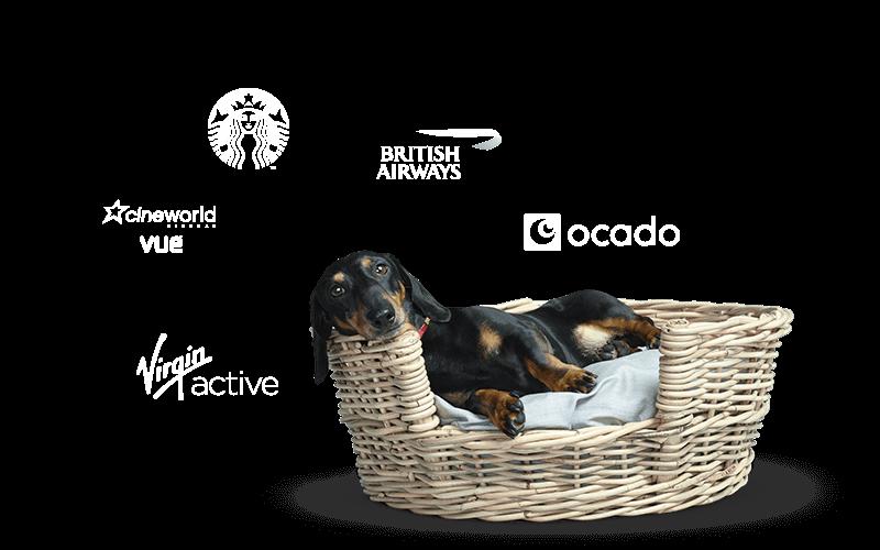Stanley sitting in basket