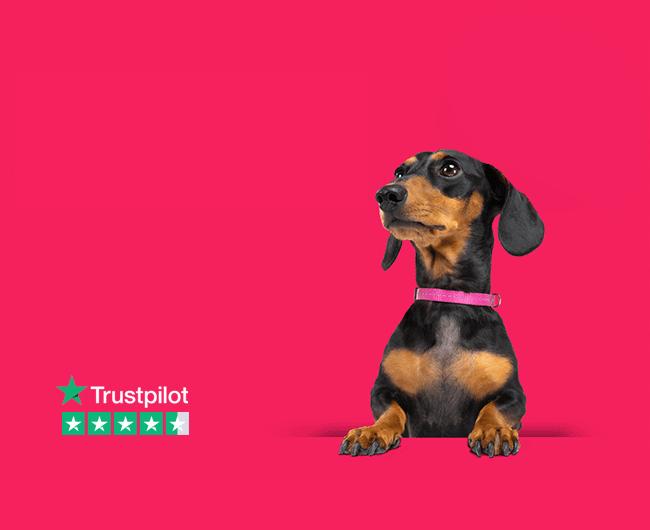 homepage stanley trustpilot